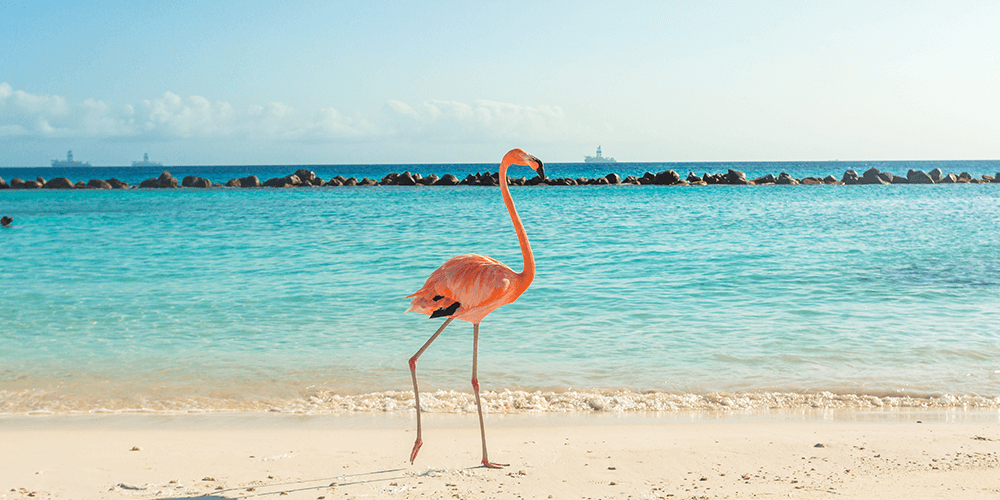 Curaçao Last Minute inclusief huurauto